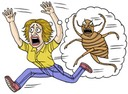 Bed bug false alarms just as bad as the real thing